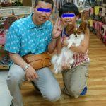 パピヨン 向ちゃん 6月15日生まれ 女の子 白茶 宮崎県出身