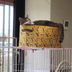 保護猫 ボルトくん