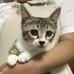 保護猫 小夏ちゃん