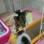 保護猫 ビバノン