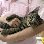 保護猫 フェスタ