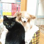 保護猫 ナナちゃん