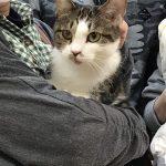 保護猫 やまとちゃん