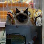 保護猫 エリちゃん