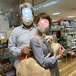 ロングコートチワワ 10月28日生まれ ホワイト&クリーム 女の子 宮崎県出身